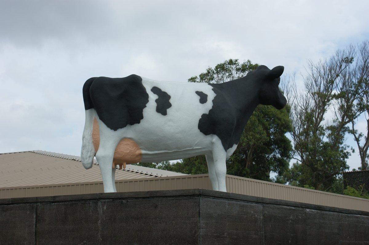 vaca-telhado